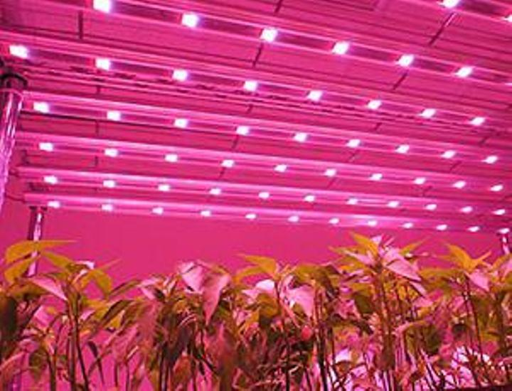 Why LED Grow Lights for Seedlings Produce High-Quality Plants