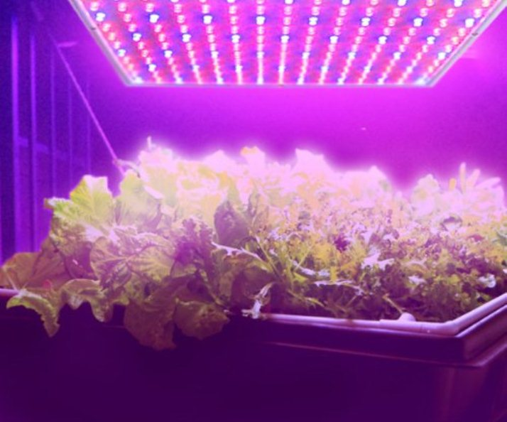 Indoor Farming with LED Grow Lights for Orchids