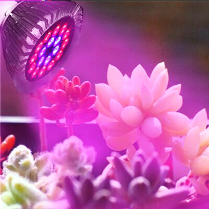 Applications And Advantages Of LED Grow Lights For Succulents