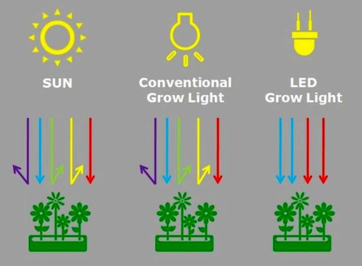 Comparing LED Grow Lights For Succulents Wavelengths With Others