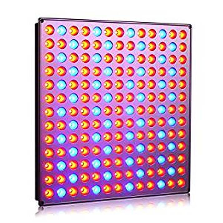 Basics and Benefits of LED Grow Lights for Indoor Farming